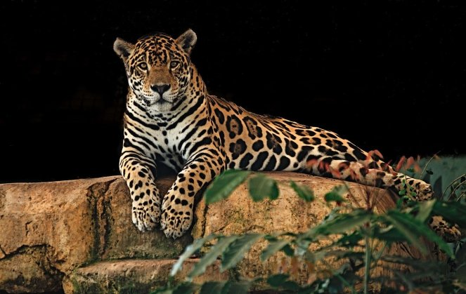 jaguar-2800382_1280